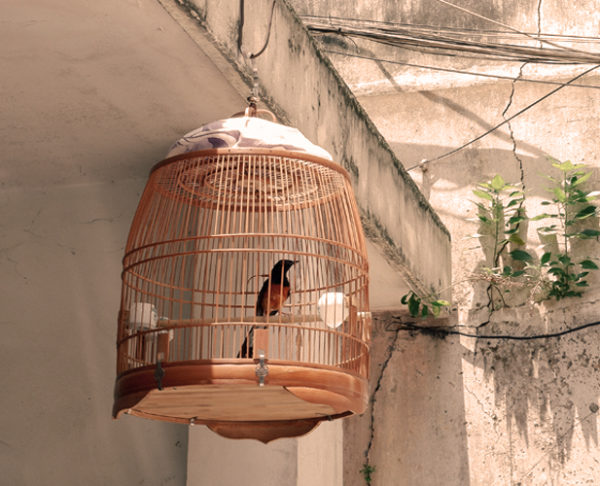 Important Tips to Consider For Buying a Wooden Bird Cage
